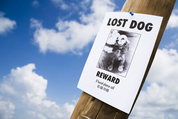 lost-dog-sign